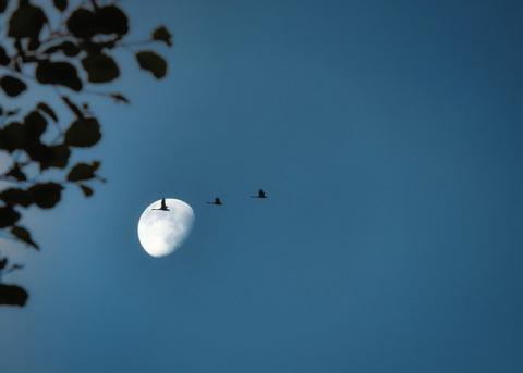 Trekvogels [foto: Lolame]